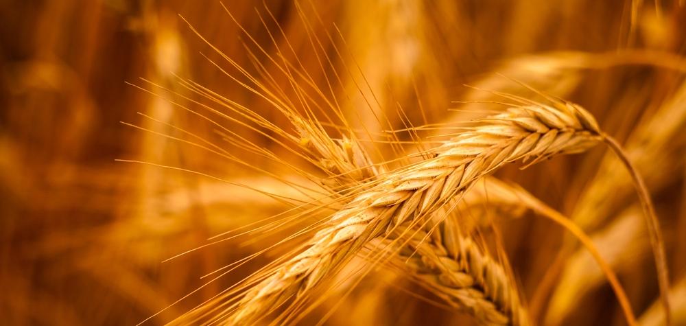 Barley Brings WYSIWYG Web Editor to WordPress