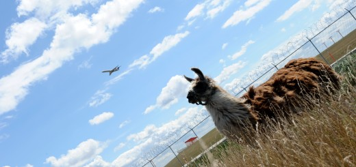 US-AIRPORT-ENVIRONMENT-ANIMALS