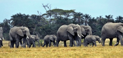 KENYA-TANZANIA-WILDLIFE-CENSUS