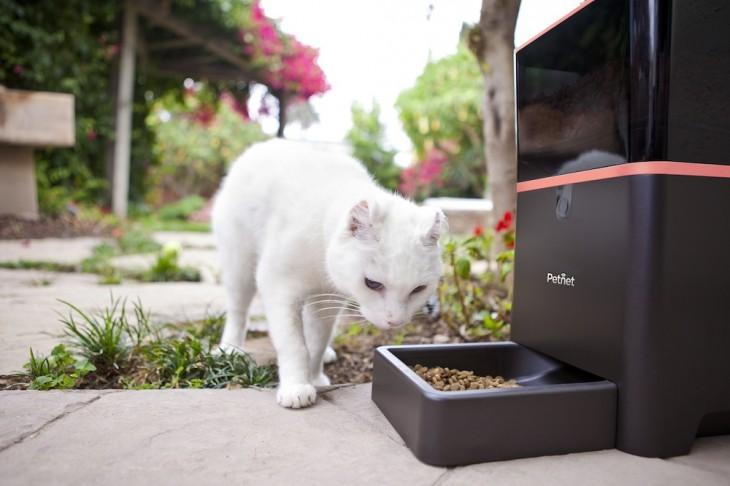 petnet-lifestyle-cat