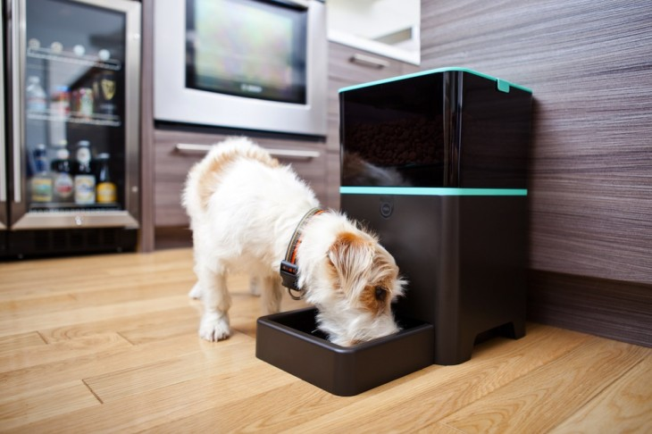 petnet lifestyle dog 730x486 This company shows how the Internet of everything will make a difference to your dogs and cats