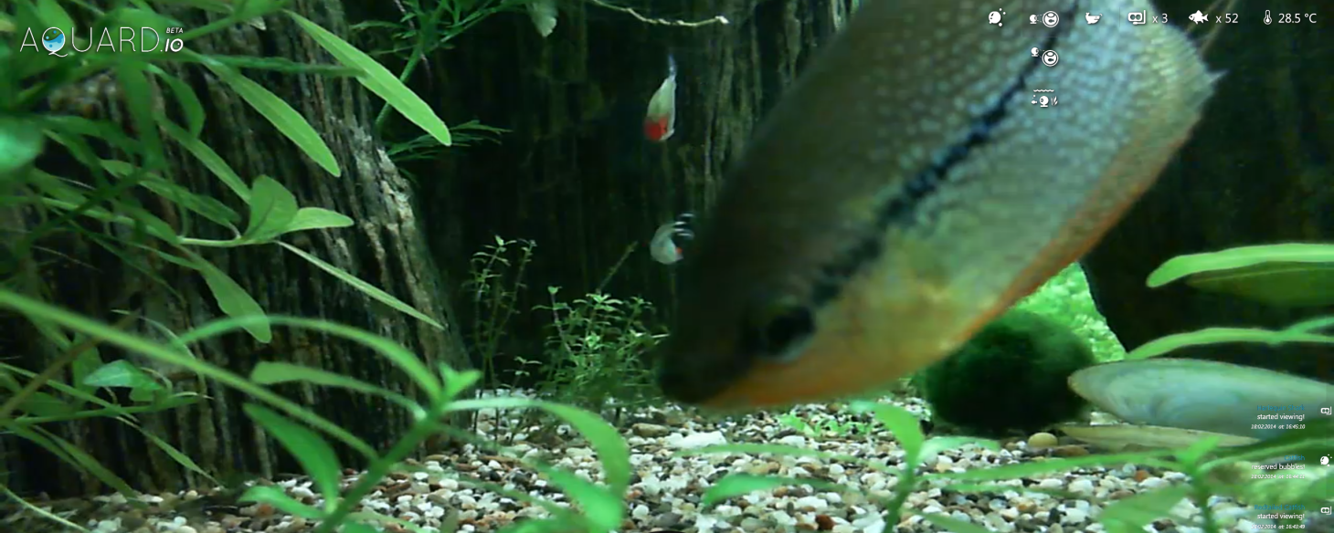 Bored at Your Desk? Kill Time Feeding Some Real Fish via This Web App