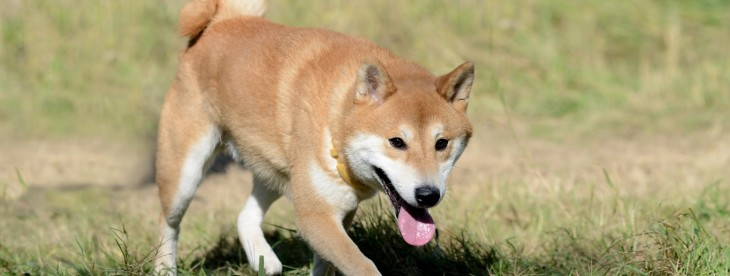 Dogecoin founder says he rejected $500,000 investment offers