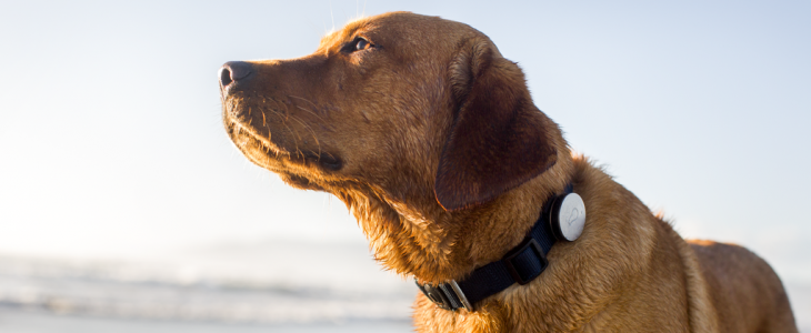 Whistle adds Android support to its wearable activity tracker for dogs