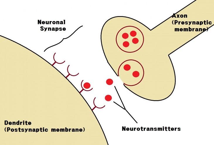 Neuronal_Synapse