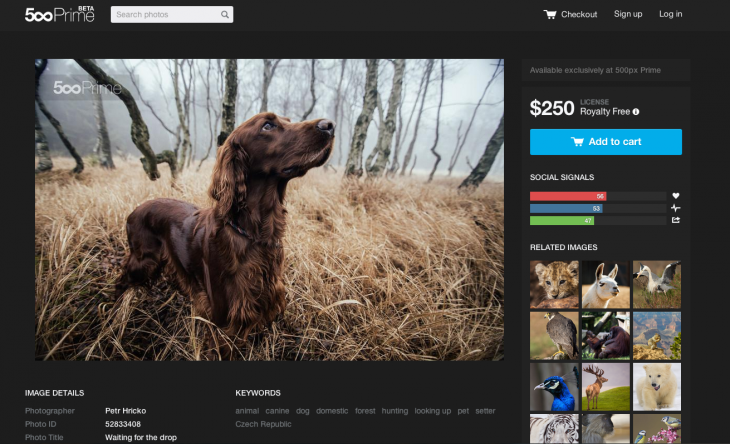 500px' commercial 'Prime' photo marketplace rolls out of beta