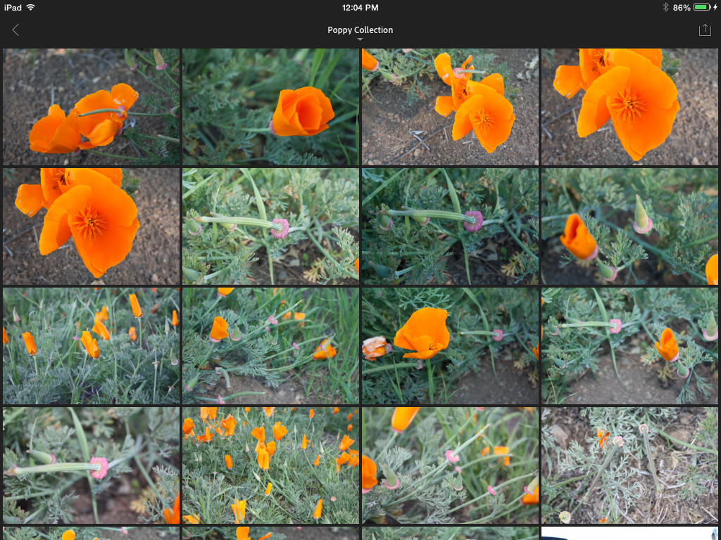 Adobe Lightroom Mobile for iPad highlights integrated