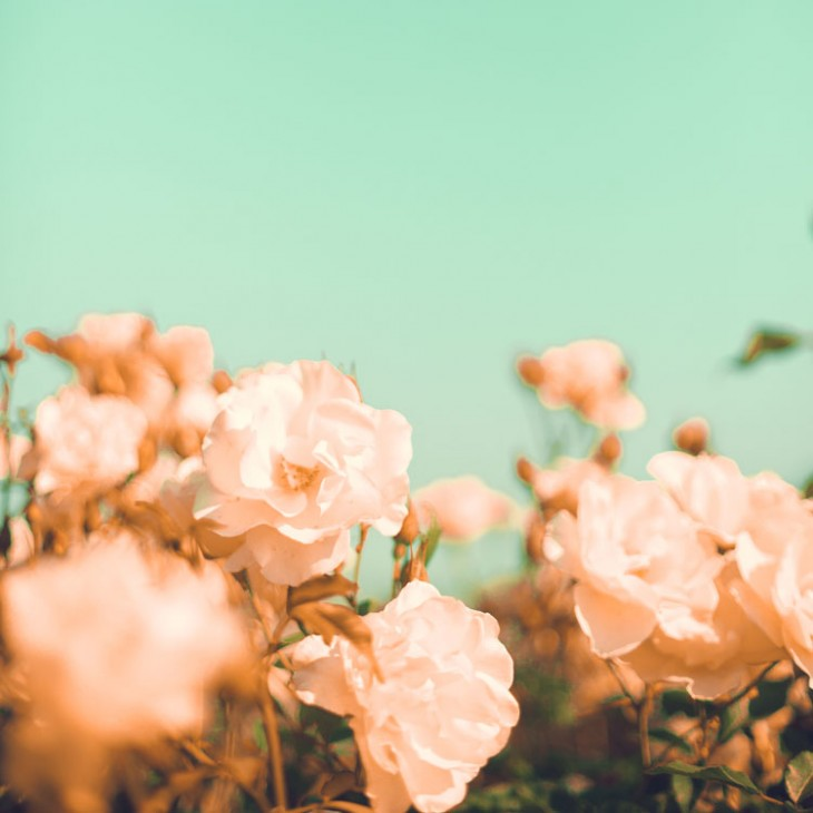Andrekart Photography | Vintage Pastel Roses