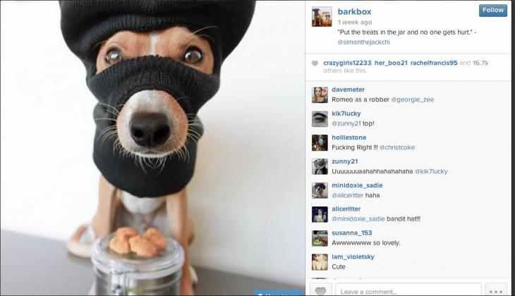 Barkbox-Screenshot