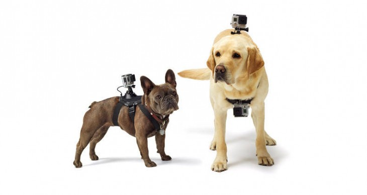 GoPro's Fetch harness lets you capture the world from a dog's point of view