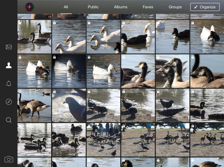 Flickr finally launches for iPad