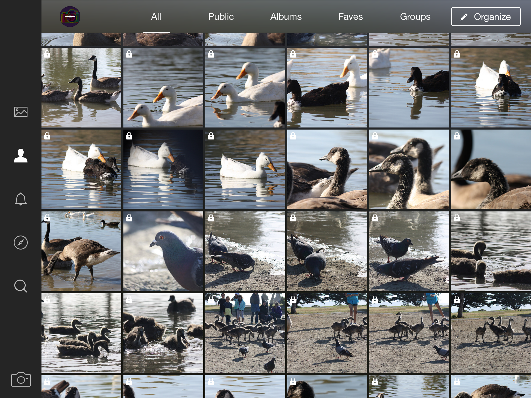 Flickr Launches for iPad