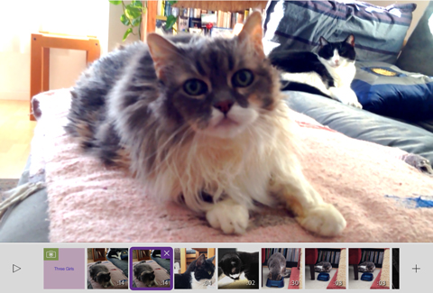 Celebrate National Cat Day with a video on Adobe's Purrrmiere Clip Catmunity Feed