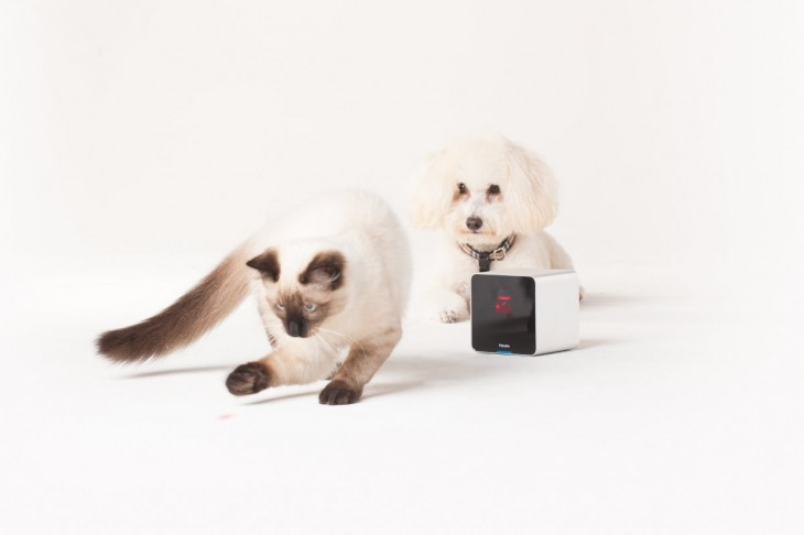 Petcube to start shipping its crowdfunded pet camera in time for Christmas