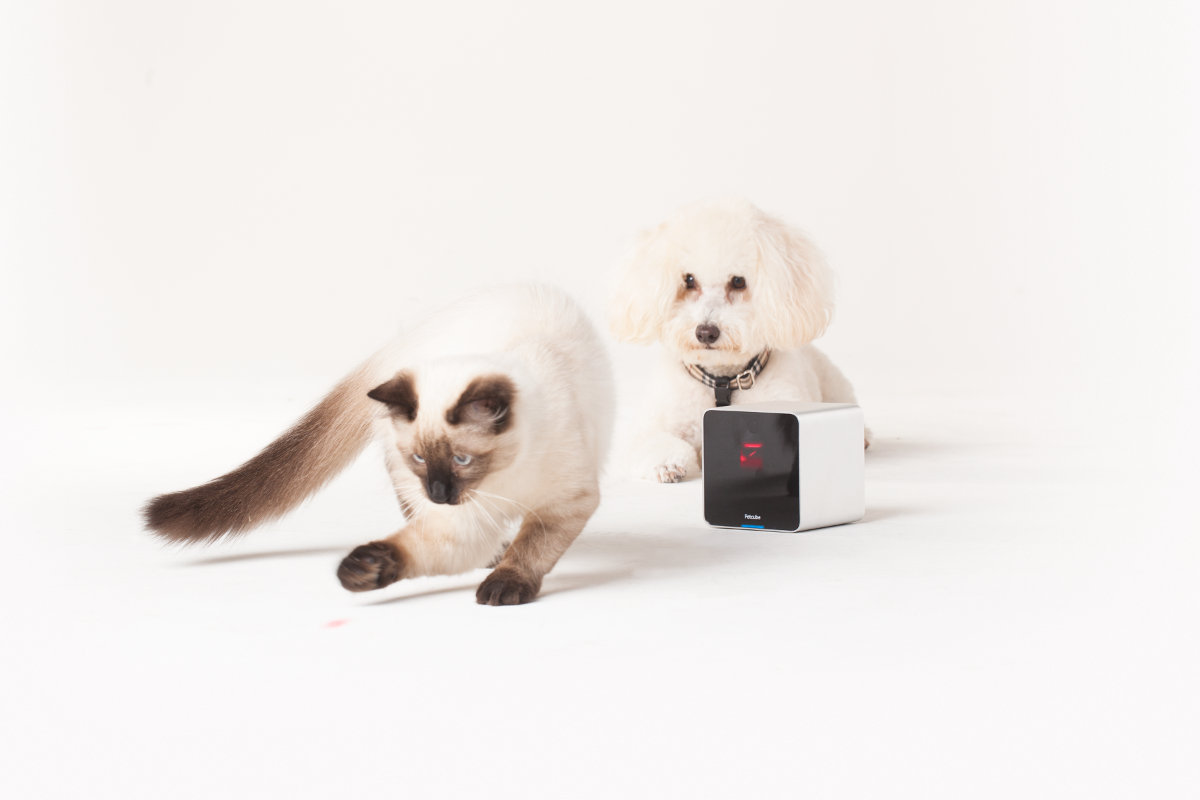 Petcube Starts Shipping Its Crowdfunded Pet Camera in Time for Christmas