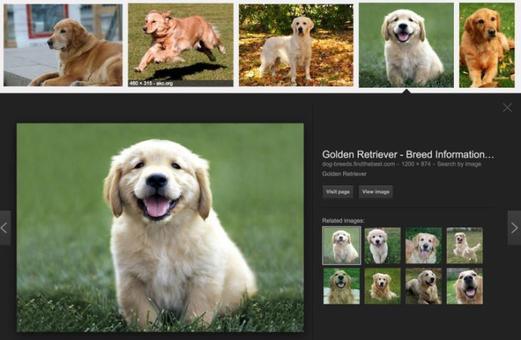 golden-retrievers-google-search-800x523