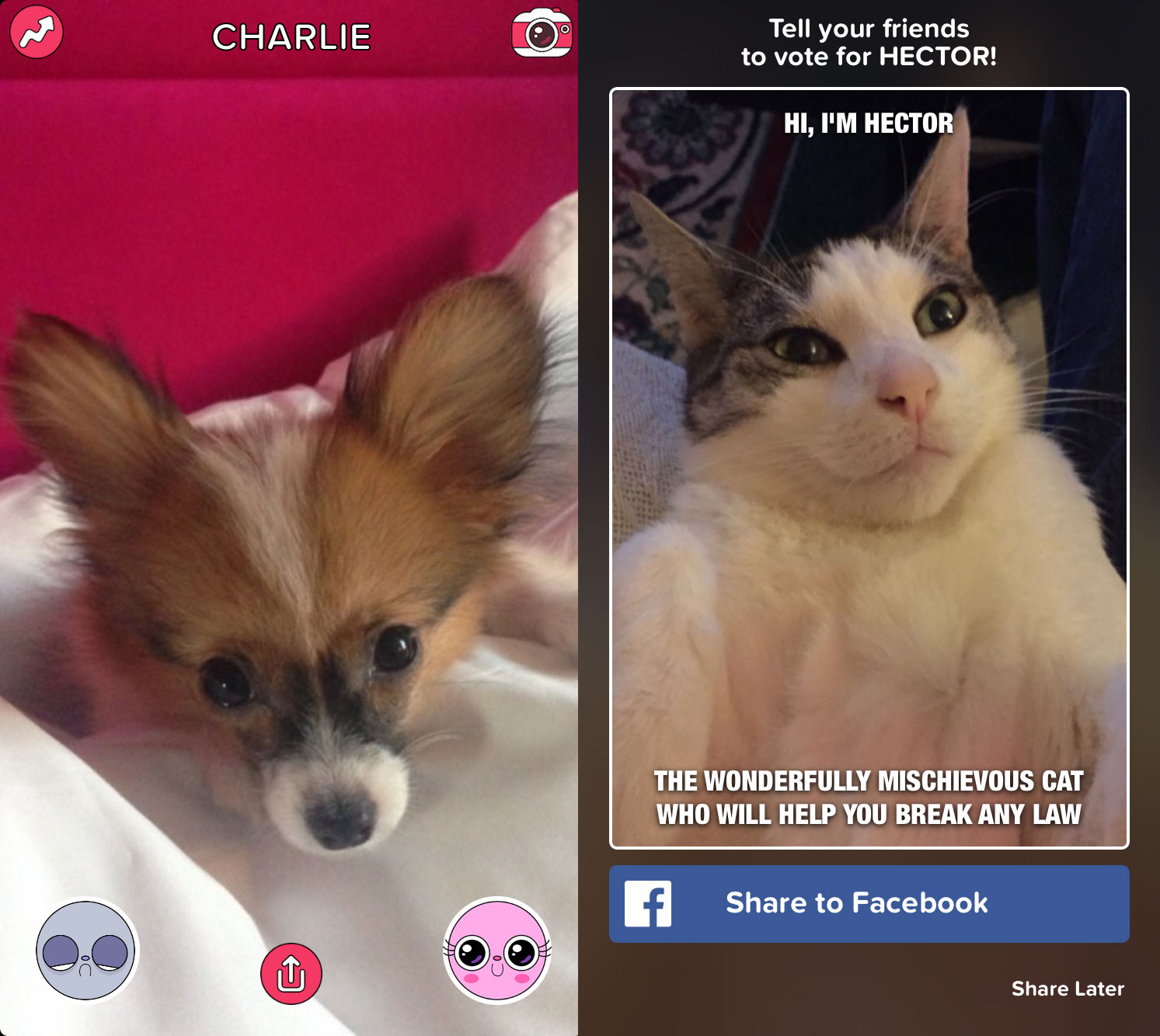 buzzfeed launches cute or not app for pets