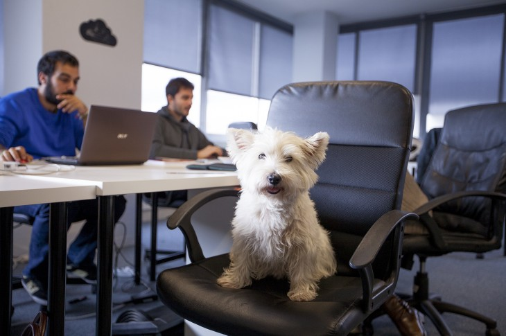10 adorable startup pets that make the office feel like home