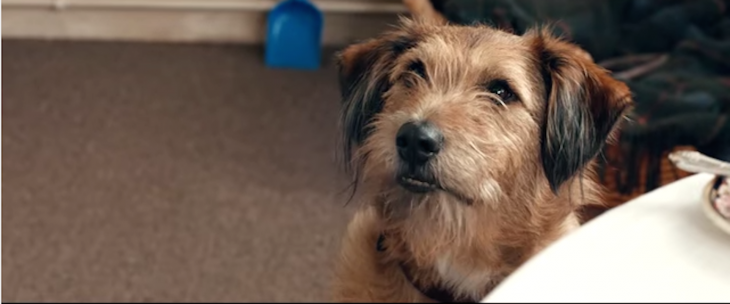 The trailer for Robin Williams' final movie 'Absolutely Anything' is premiering on ...