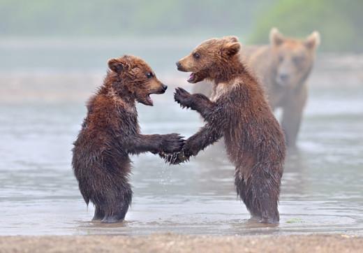 nikolai-zinoviev-bear-6-conversation