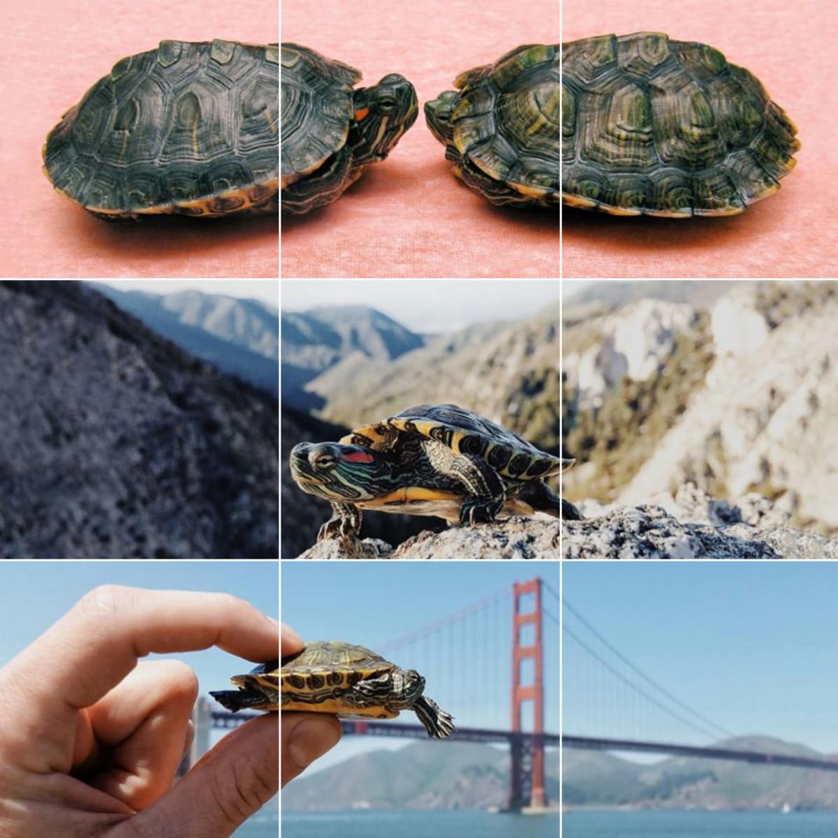 turtles_1