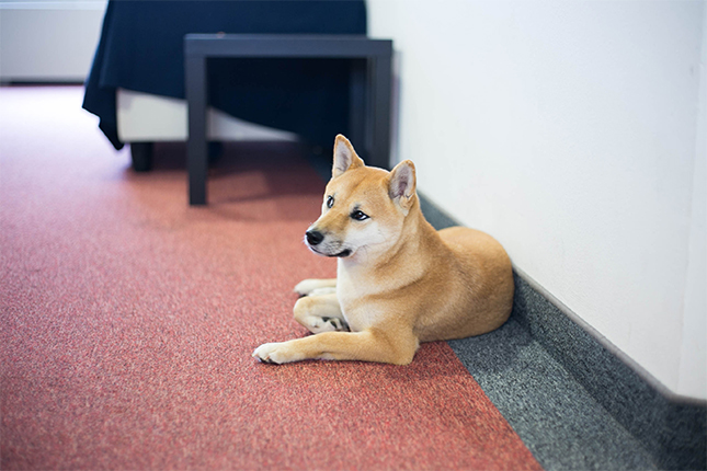 12 more adorable startup pets at the awwfice