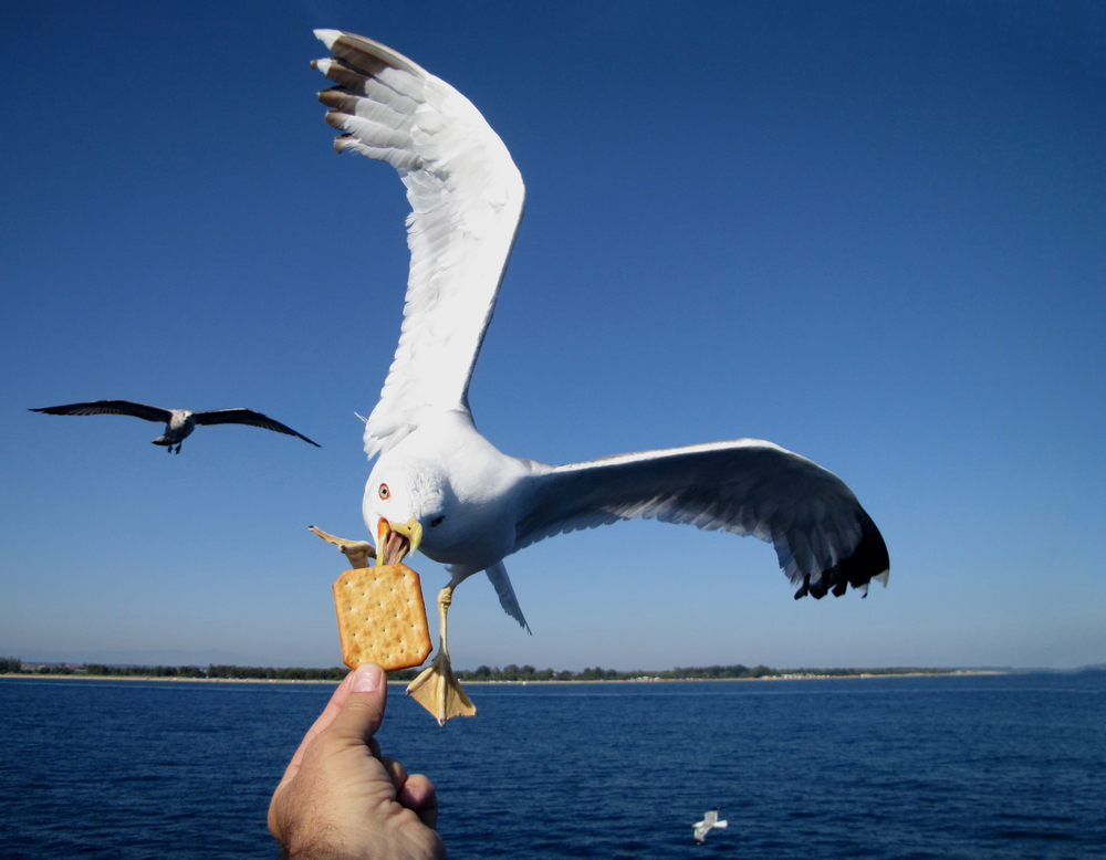 UK councillor wants armed drones to kill seagulls