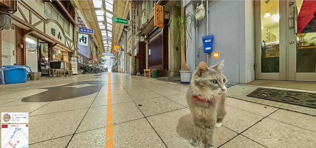 Cat Street View_Cat