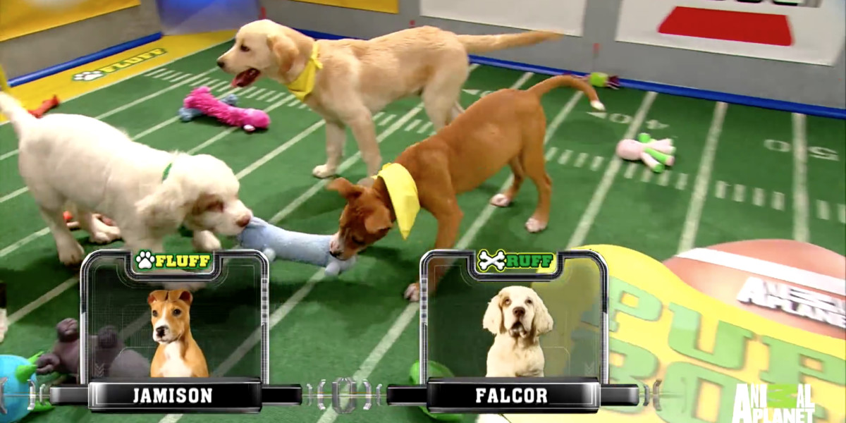 Not a football fan? Catch the Puppy Bowl in 360-degree VR instead