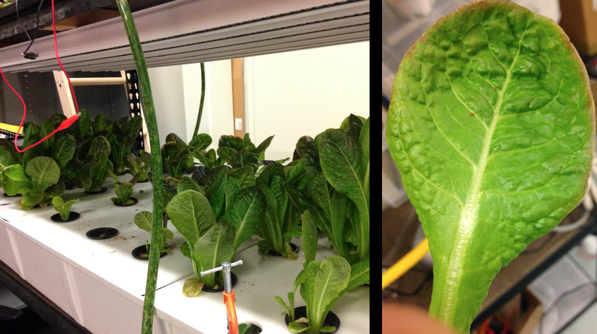 Google quietly got out of the vertical farming business last year. Yep, you heard right.