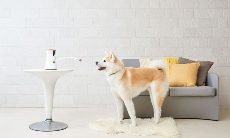 Furbo lets you catapult treats at your dog when you're not around