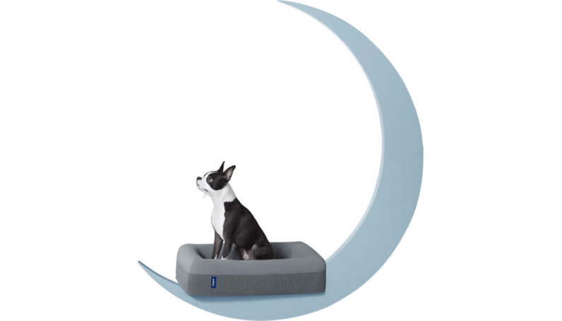 Casper now sells memory foam beds for your spoiled pups
