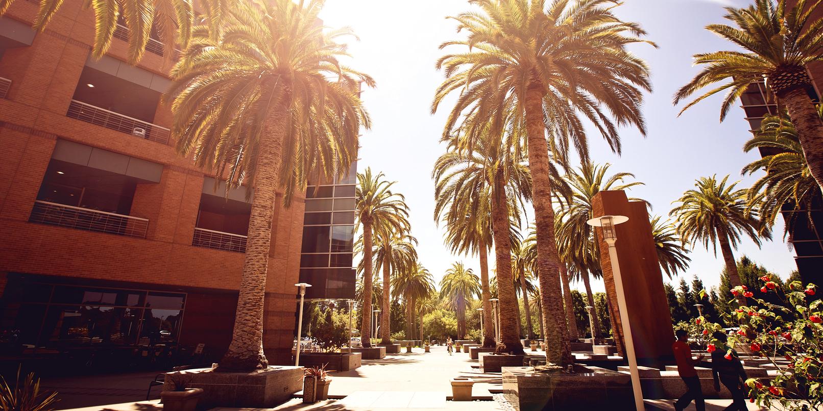 Palo Alto mayor: Tech firms are 'choking' the city