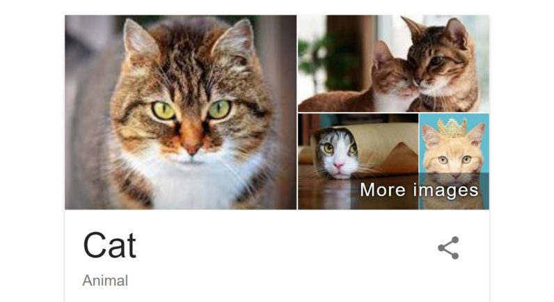Google's getting into the cat facts business