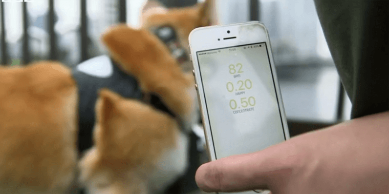 'Inupathy' smart collar acts as a mood ring for your dog