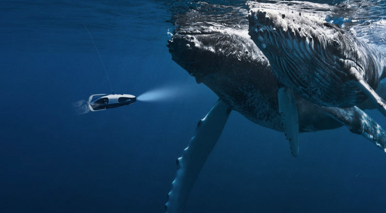This Underwater Drone Uses Sonar To Track Down Fish And