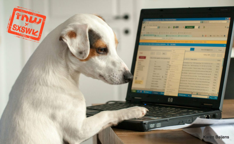 The chicken-and-egg problem of establishing if you're a dog online