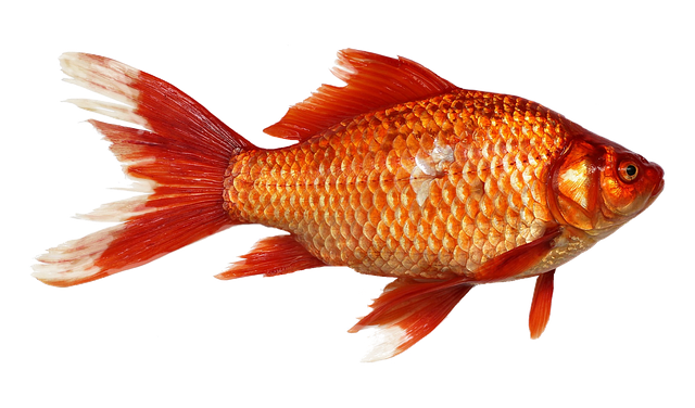 How Your Startup Can Survive the Goldfish Economy