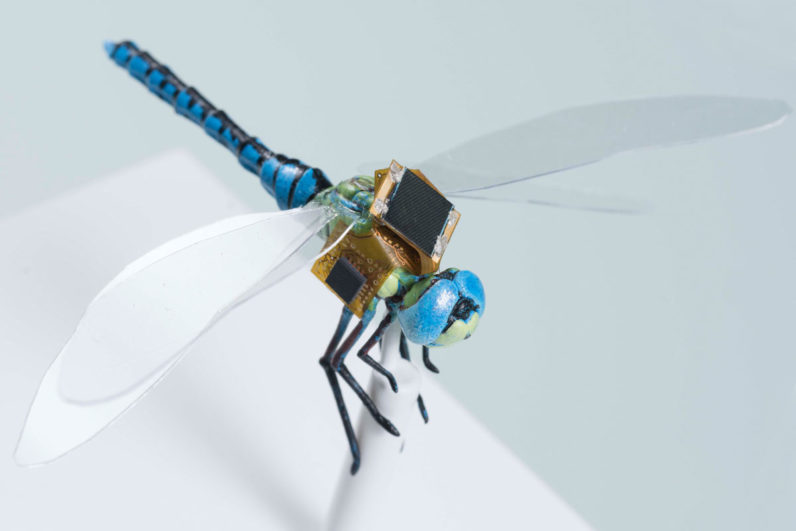 Watch this cyborg dragonfly drone take flight