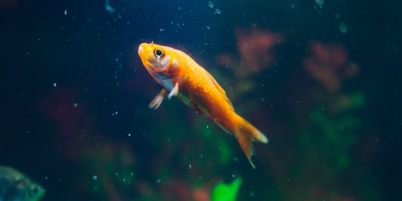 Go phish: A smart fish tank let hackers into a casino