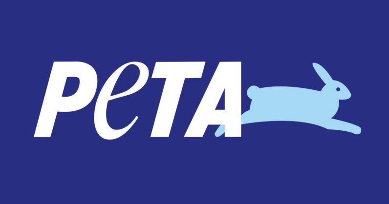 PETA settles monkey selfie court case – but at what cost?