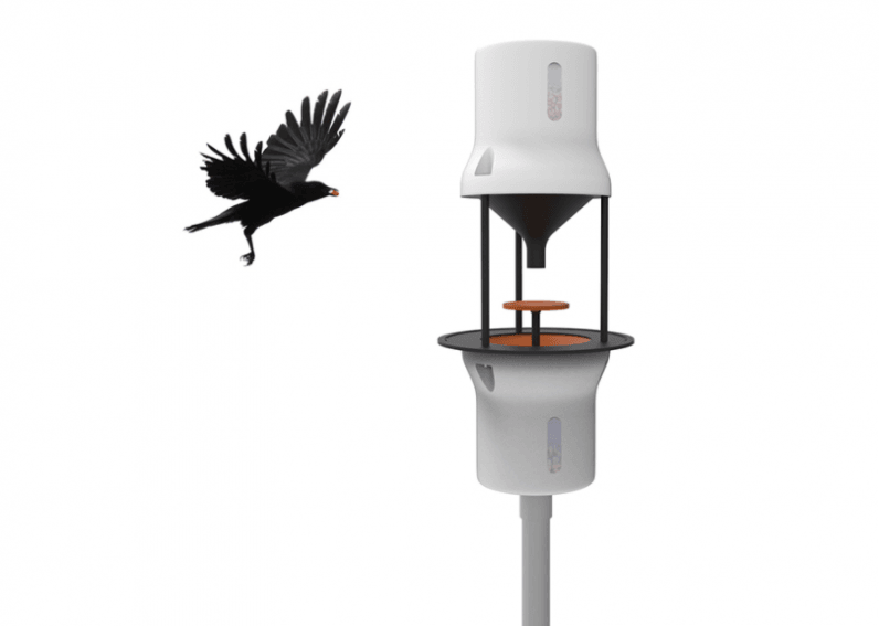 This startup wants to clear cities of cigarette butts using crows (yes, the bird)