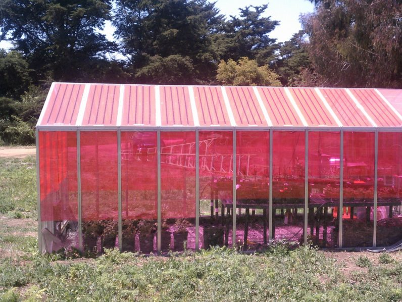 These pink greenhouses generate electricity and improve plant growth