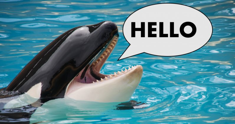 This killer whale trying to say 'Hello' in English is the best thing