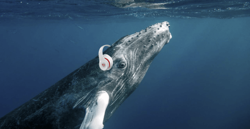 Researchers are livestreaming audio from nearly 4,000 feet below the ocean