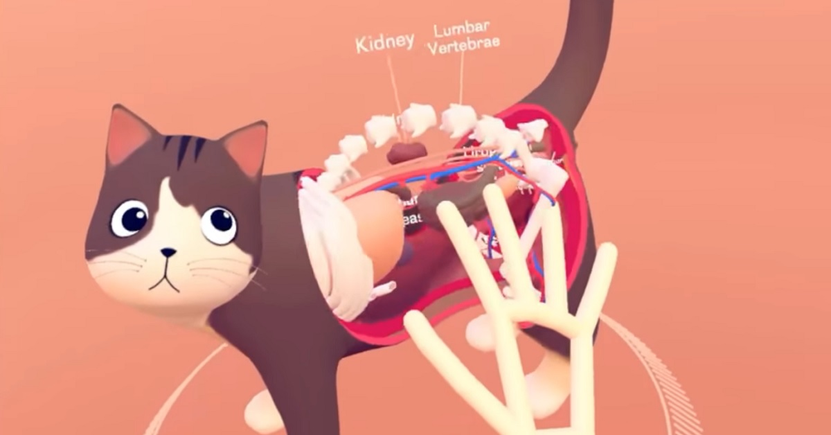 Leap Motion's VR anatomy lesson lets you pull a cat apart with your hands