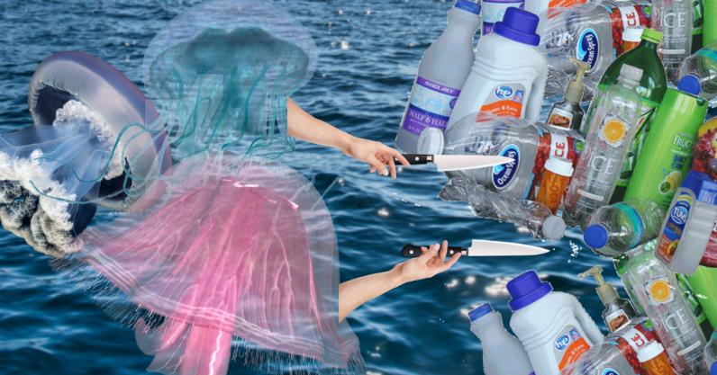 Scientists believe jellyfish could help rid our waters of plastic waste