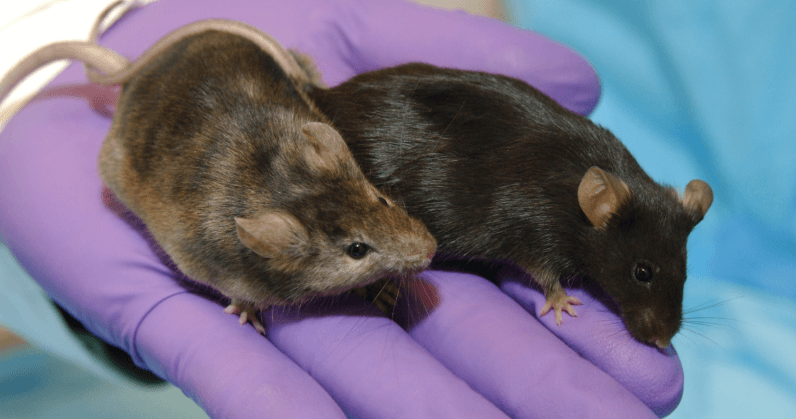 Experimental cancer vaccine combo has 100% success rate in mice