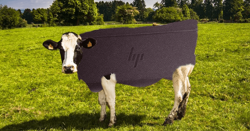 cow murder 796x417 - We calculated how many cows HP will murder to make its new leather laptop