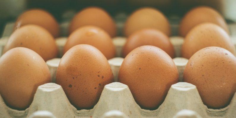 eggs 796x399 - Scientists prove same-sex mammals can make babies